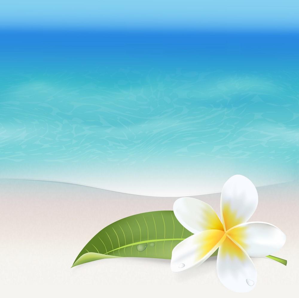 Background biển và hoa
