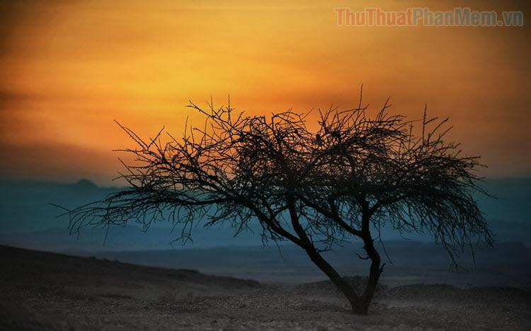 Ảnh cây đẹp