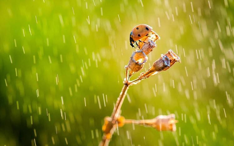 Ảnh mưa đẹp