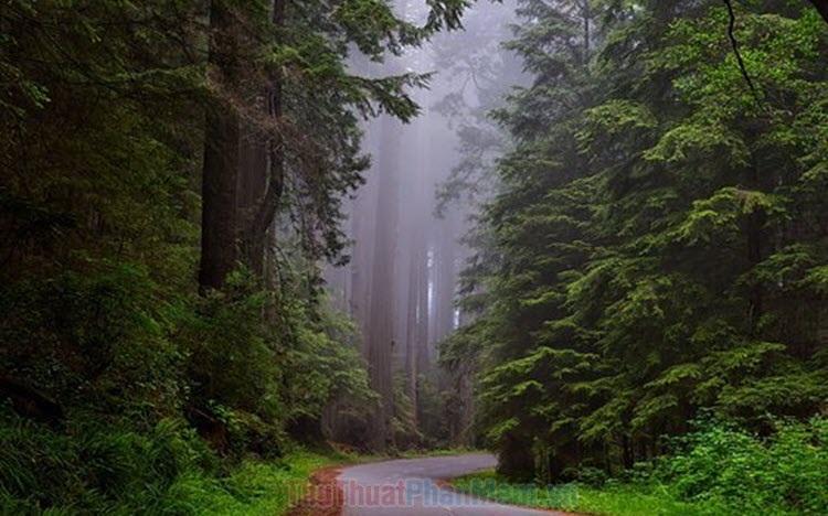Hình ảnh cây xanh đẹp