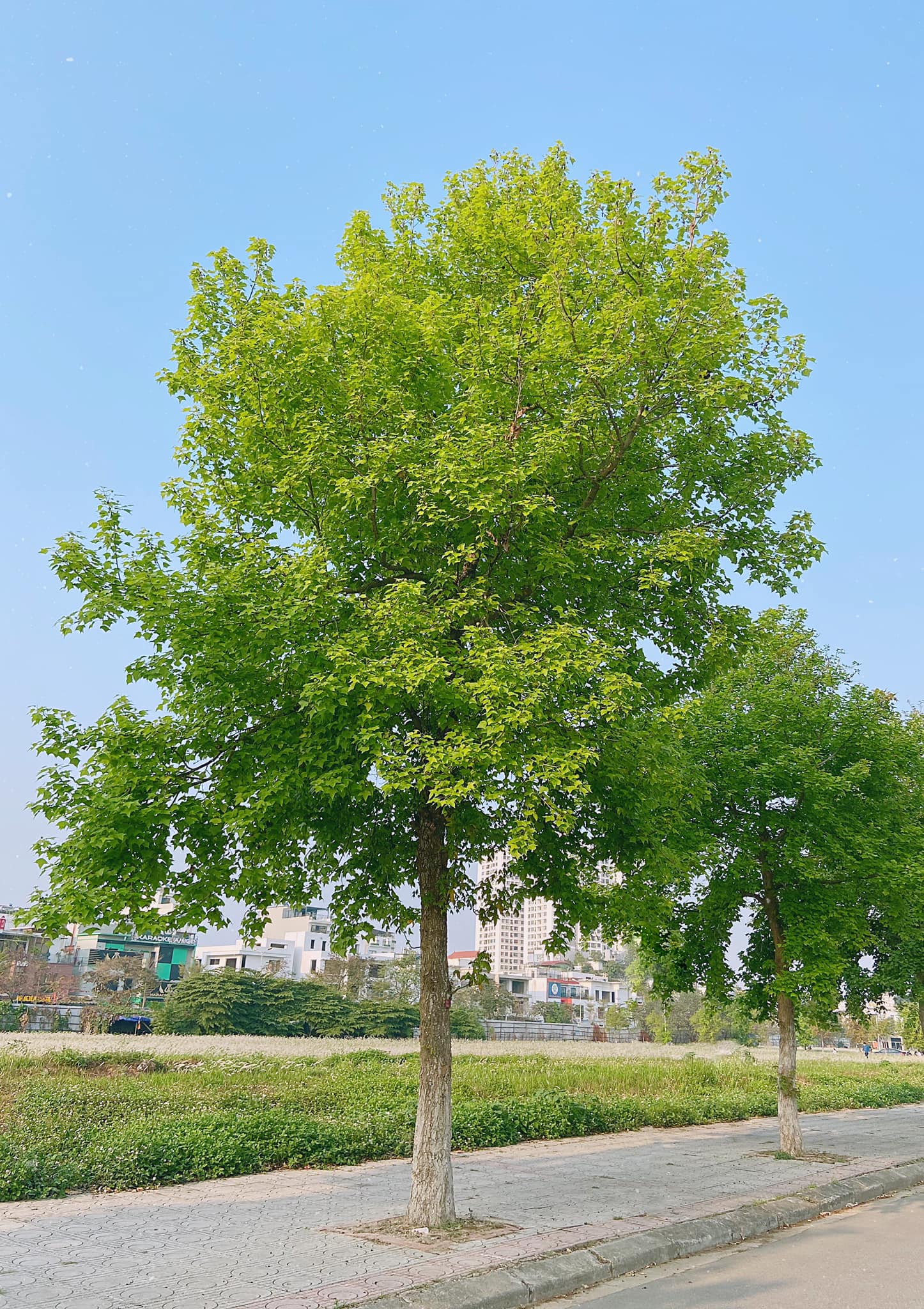 Ảnh cây xanh bên đường