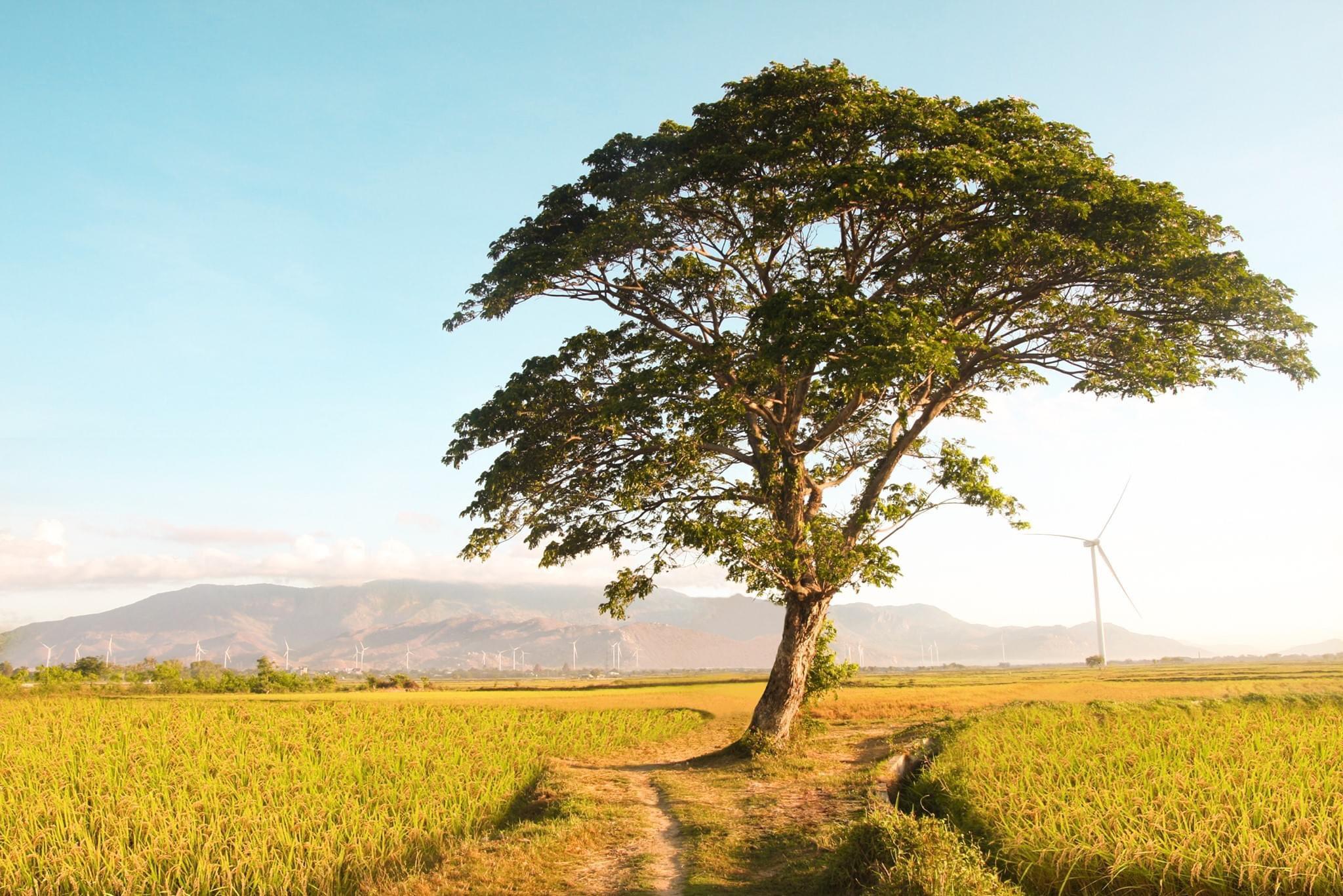 Ảnh cây xanh cô đơn