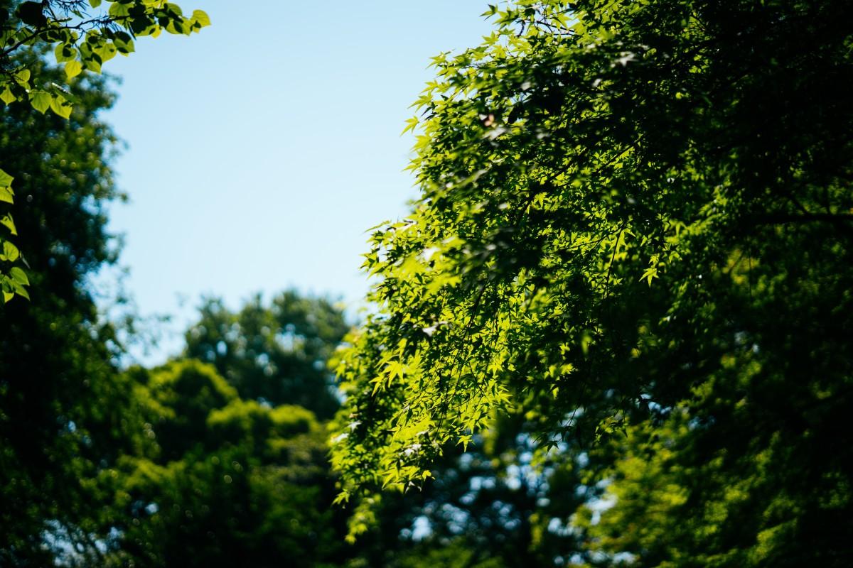 Ảnh cây xanh cực đẹp