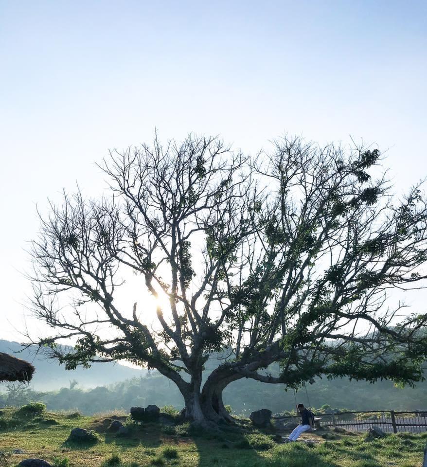 Ảnh cây xanh đẹp, chất nhất