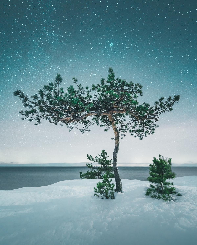 Ảnh cây xanh đẹp, độc