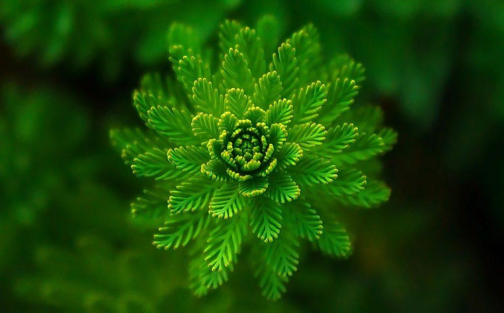 Ảnh cây xanh đẹp say đắm lòng người