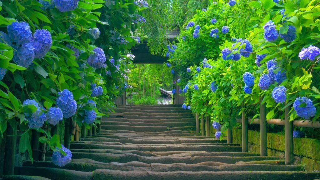 Ảnh cây xanh đẹp
