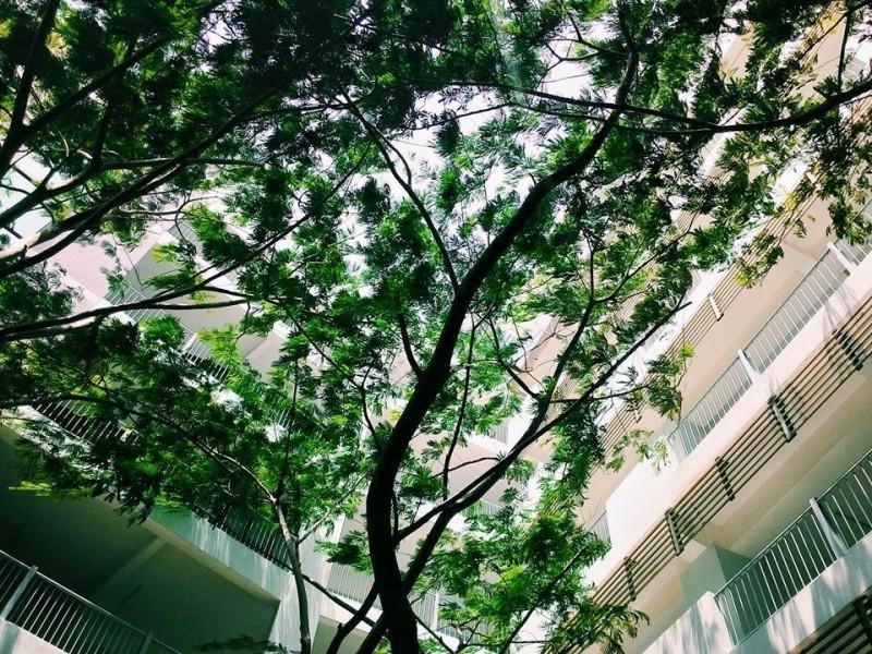 Ảnh cây xanh khuôn viên trường Đại học Tôn Đức Thắng