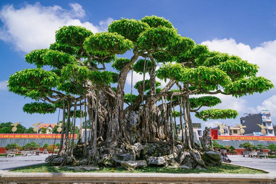 Ảnh cây xanh thế đẹp
