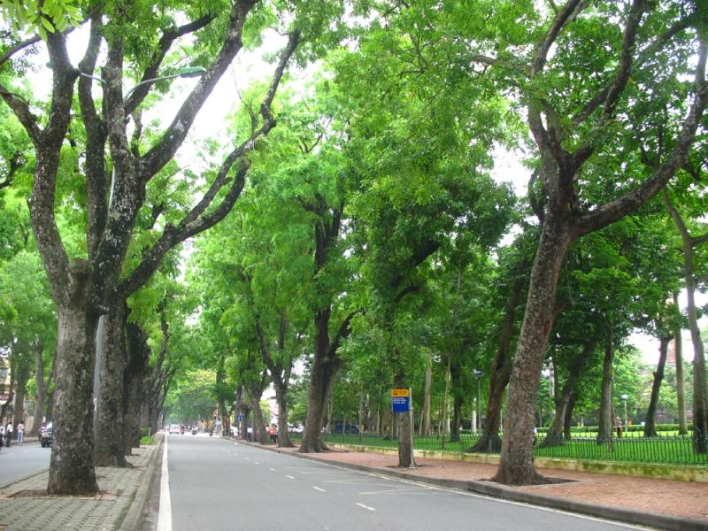 Ảnh con đường cây xanh
