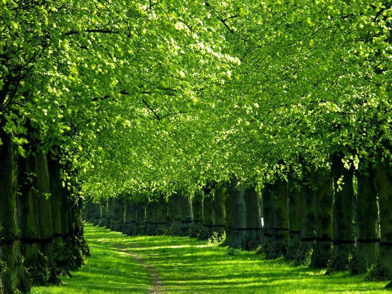 Ảnh hàng cây xanh đẹp mãn nhãn