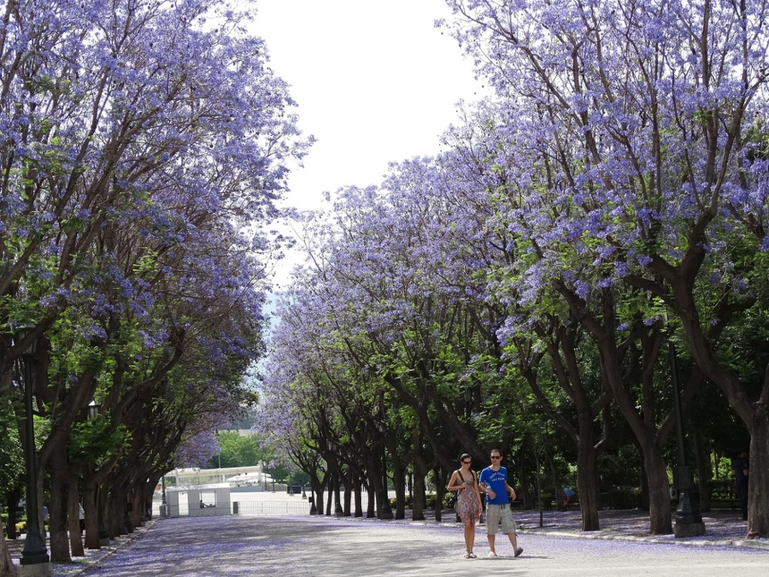 Ảnh hàng cây xanh đẹp như thiên đường giữa lòng thành phố