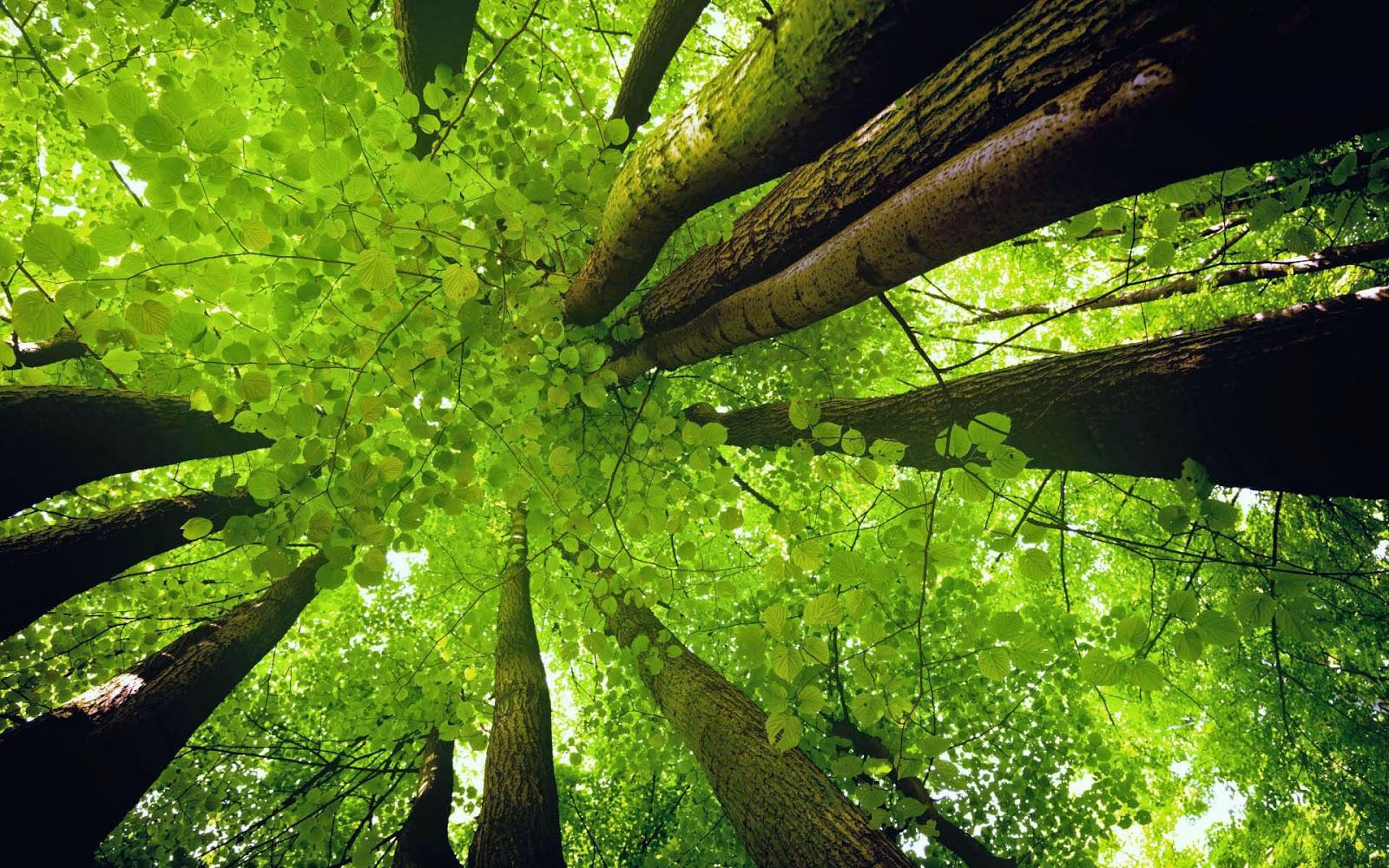 Ảnh rừng cây xanh đẹp nhất