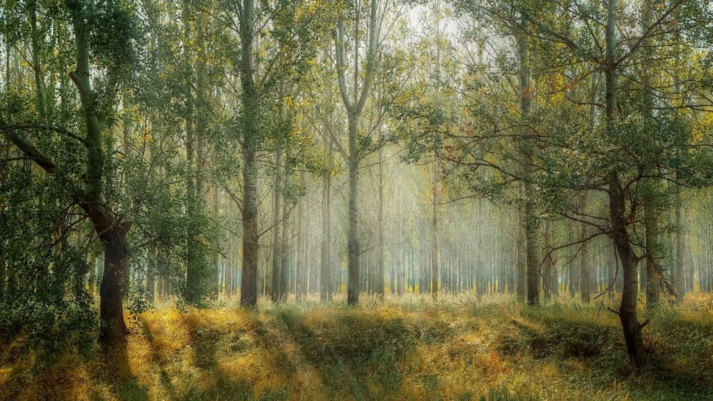 Ảnh rừng cây xanh đẹp