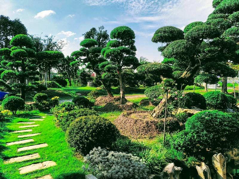 Ảnh vườn cây cảnh xanh cực đẹp