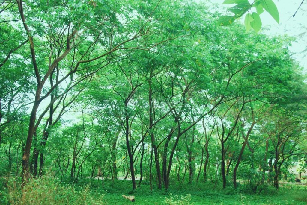 Ảnh vườn cây xanh ngát