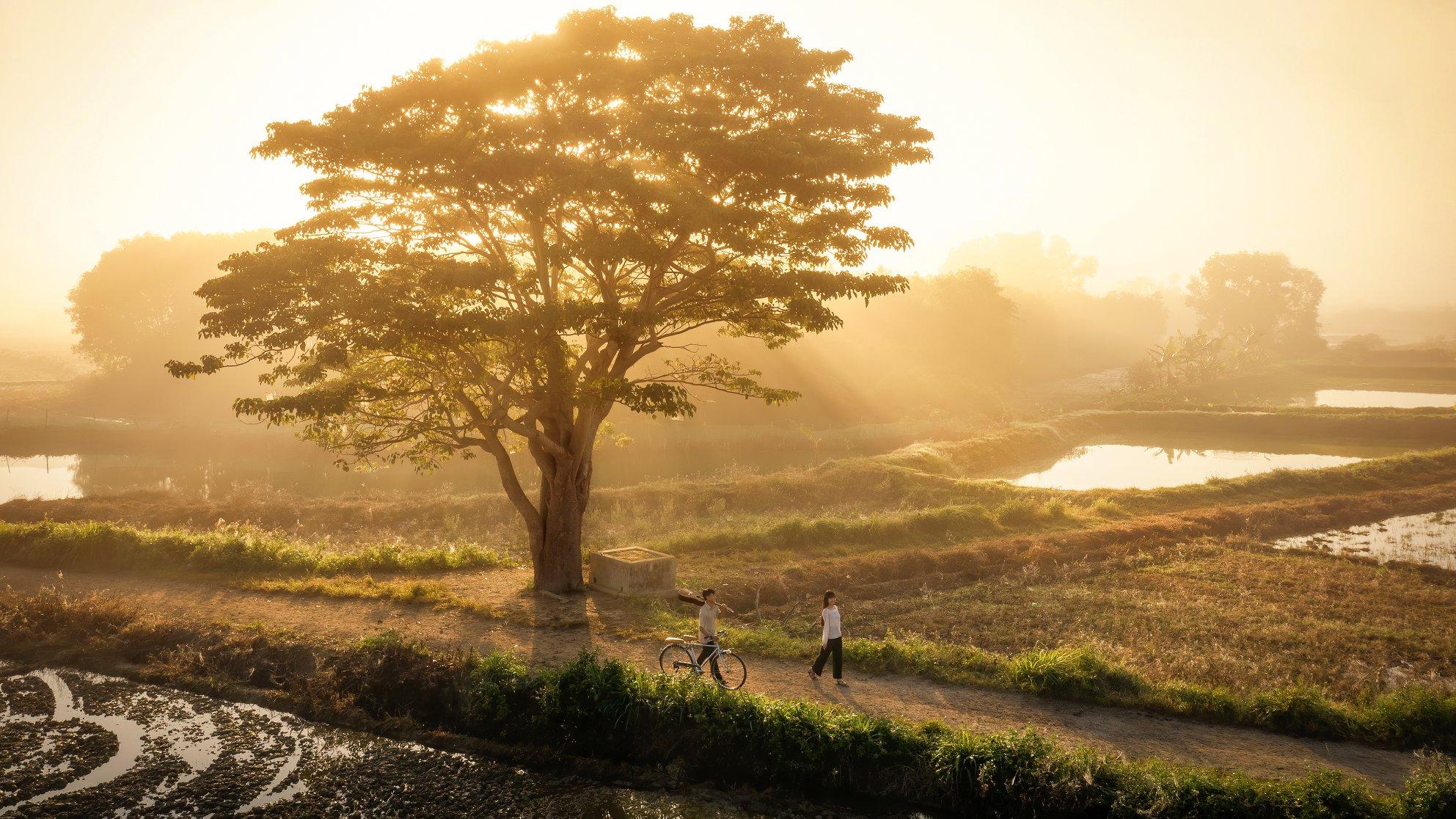 Hình ảnh cây xanh chiều hoàng hôn