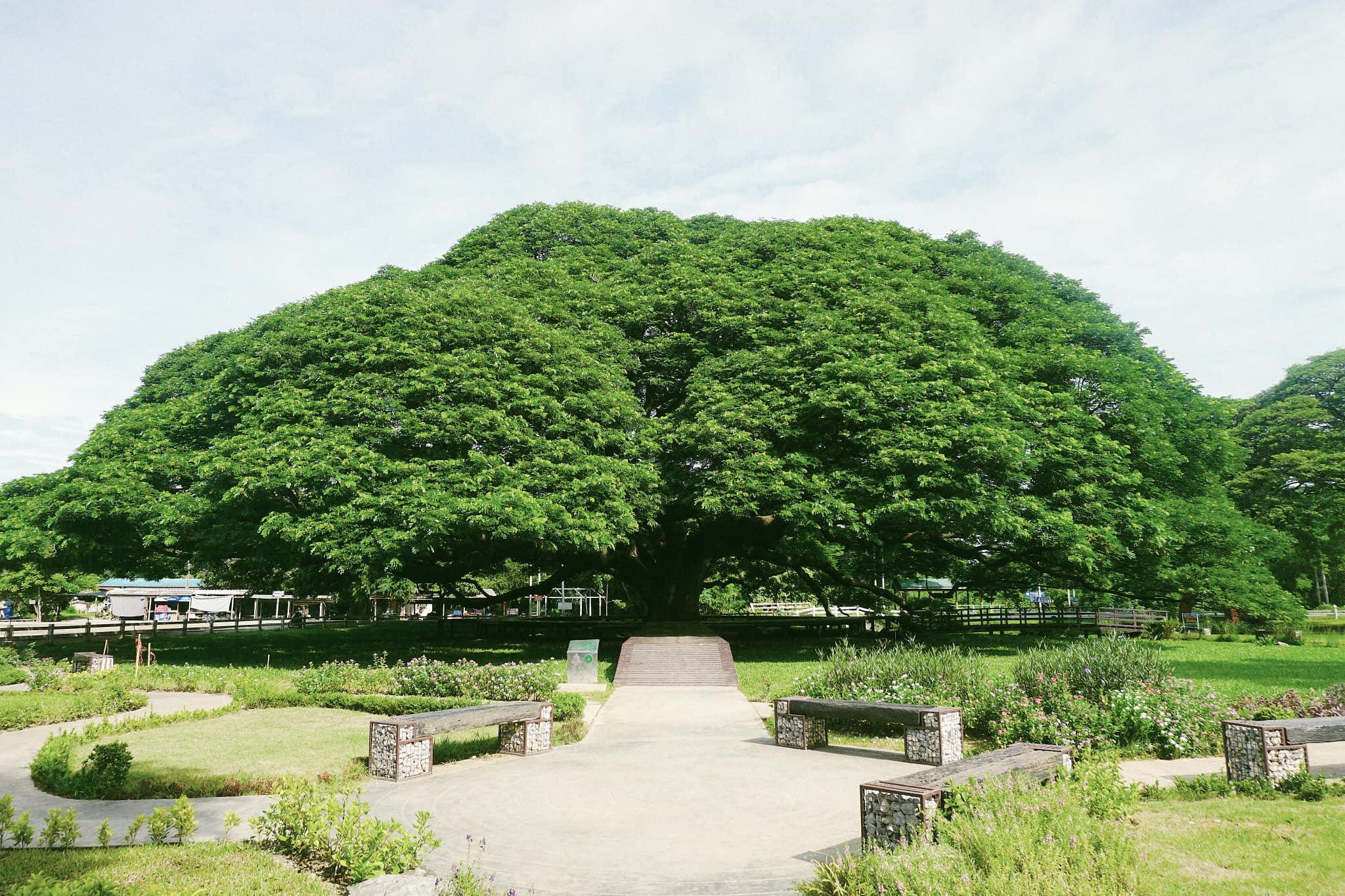Hình ảnh cây xanh cực đẹp