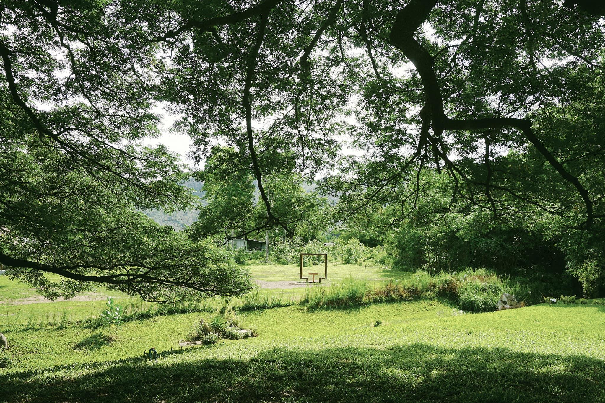 Hình ảnh cây xanh đẹp tuyệt vời