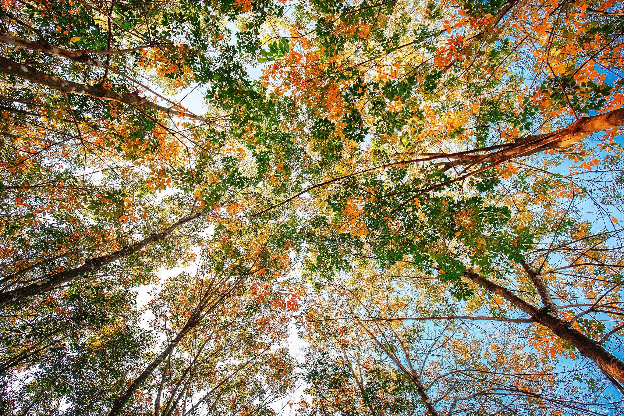 Hình ảnh cây xanh lúc chuyển mùa
