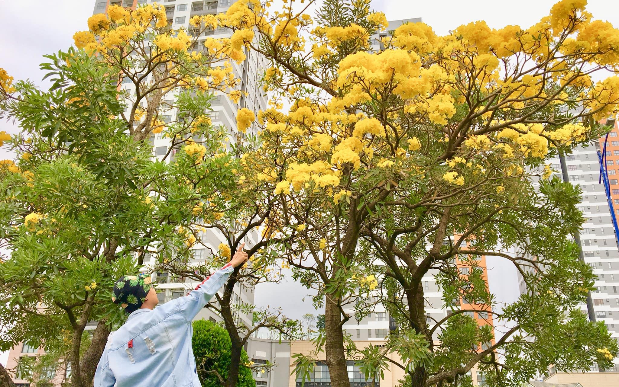 Hình ảnh cây xanh trổ hoa cực đẹp