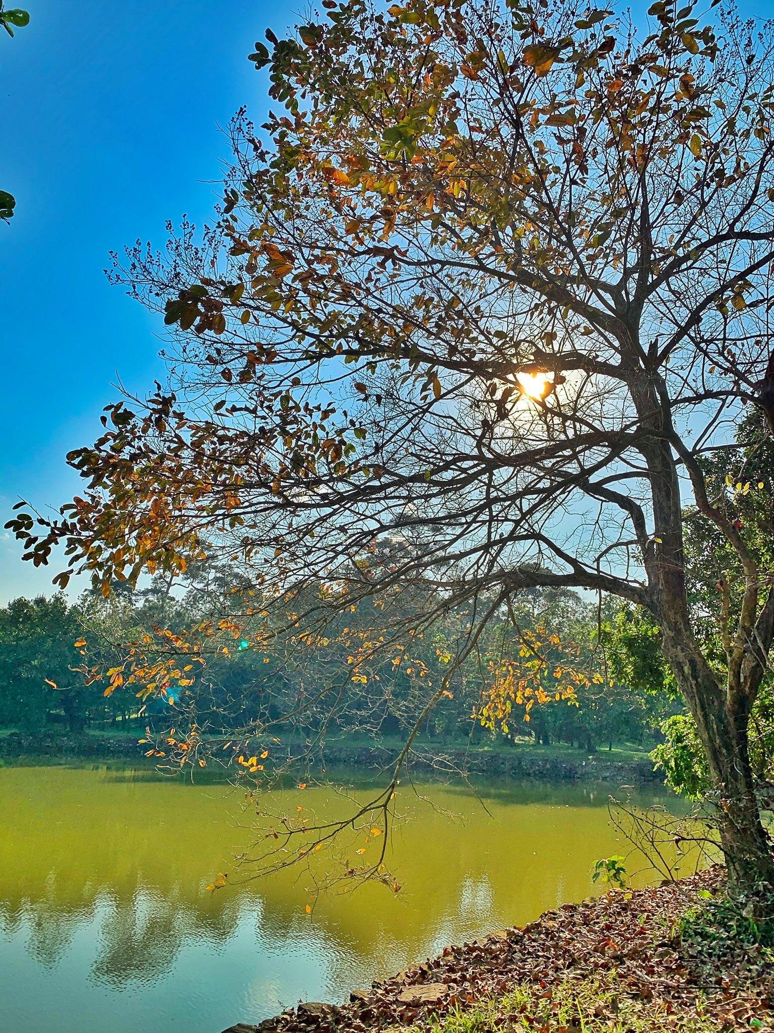 Hình ảnh đẹp về cây xanh