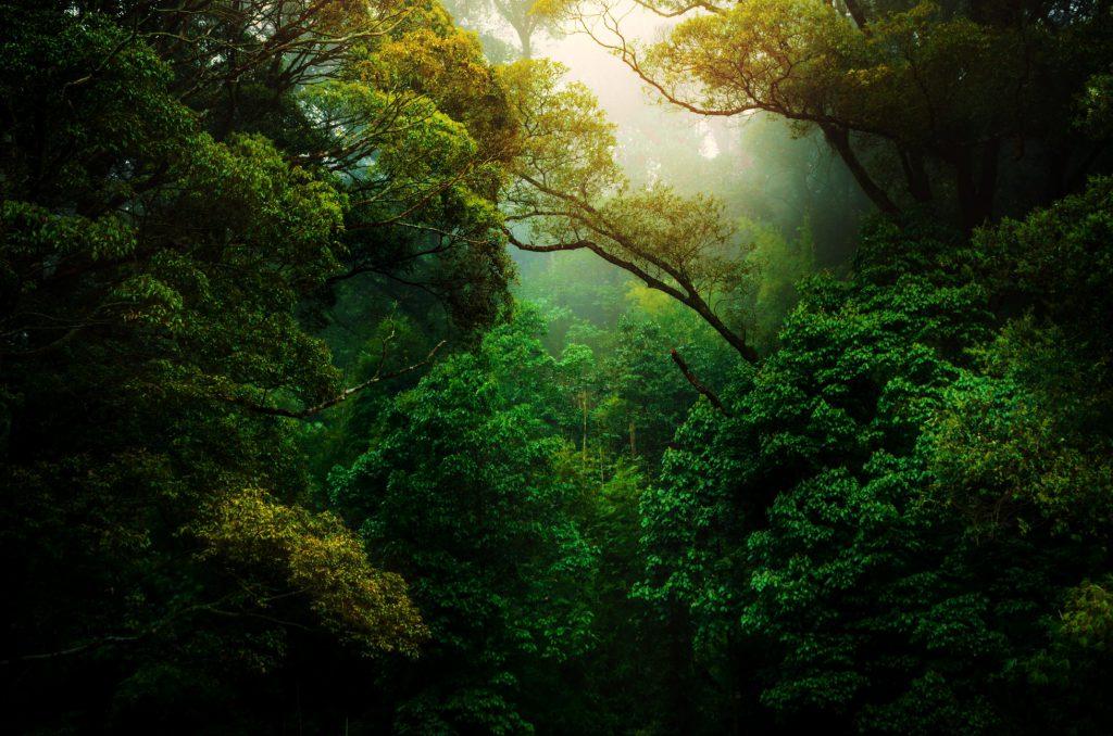 Hình ảnh rừng cây xanh đẹp