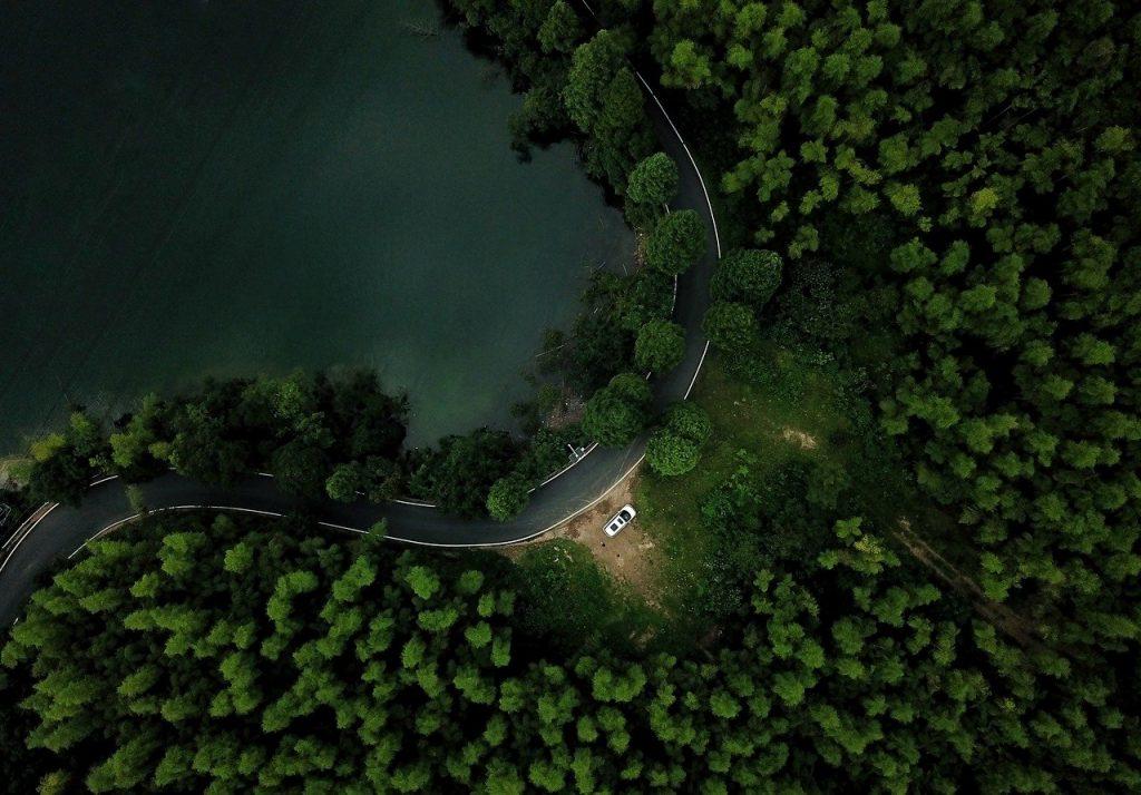 Hình ảnh rừng cây xanh nhìn từ trên cao