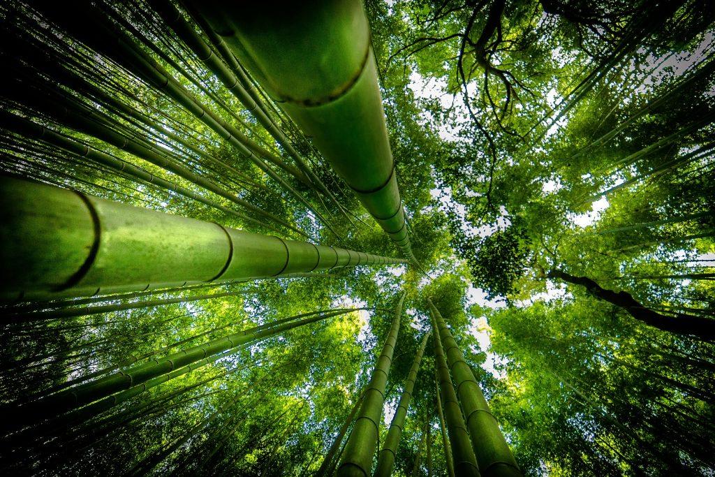 Hình ảnh rừng tre xanh mát
