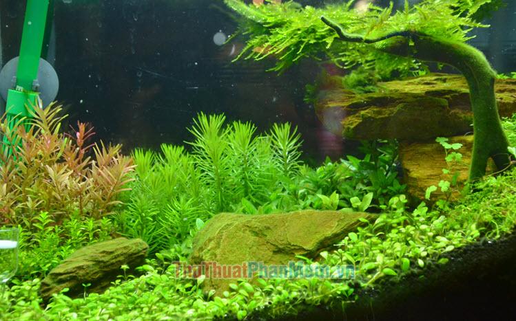 Hình ảnh cây thủy sinh đẹp
