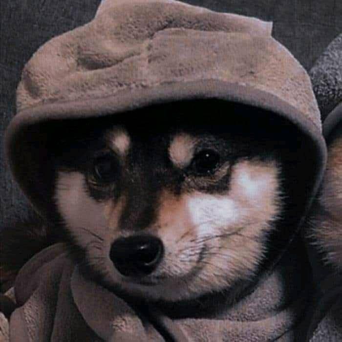 Ảnh đại diện cún cute