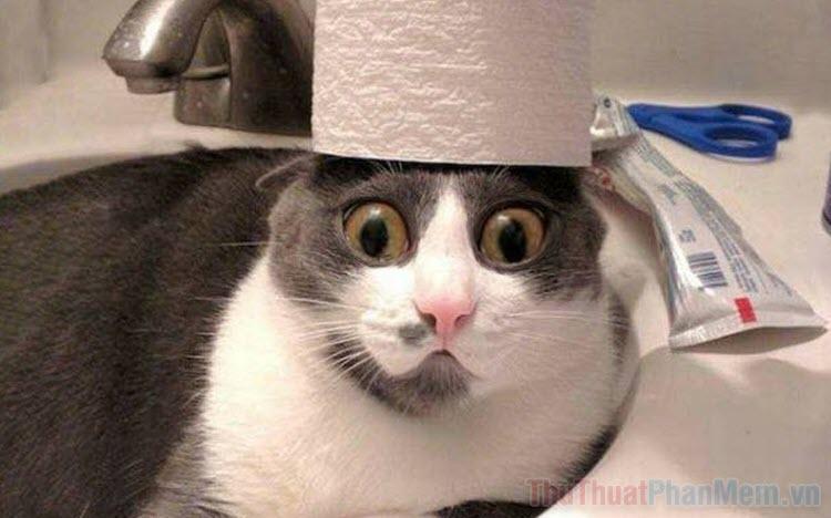 999+ Ảnh mèo bựa buồn cười nhất