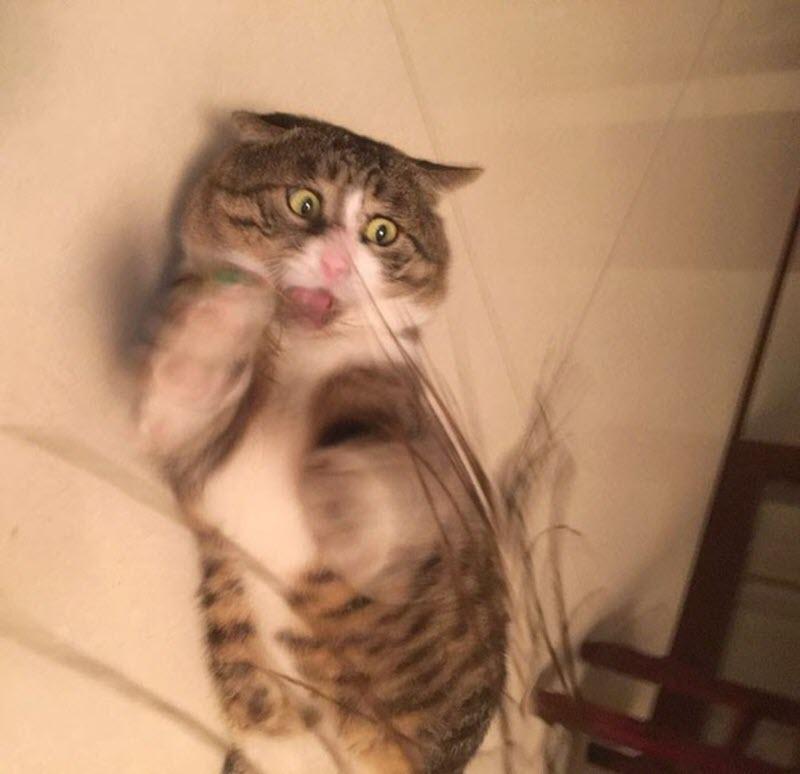 Ảnh meme mèo buồn cười nhất