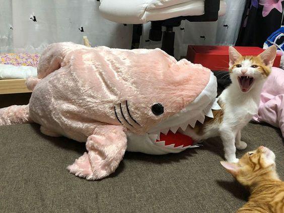 Ảnh mèo bựa buồn cười cực hay
