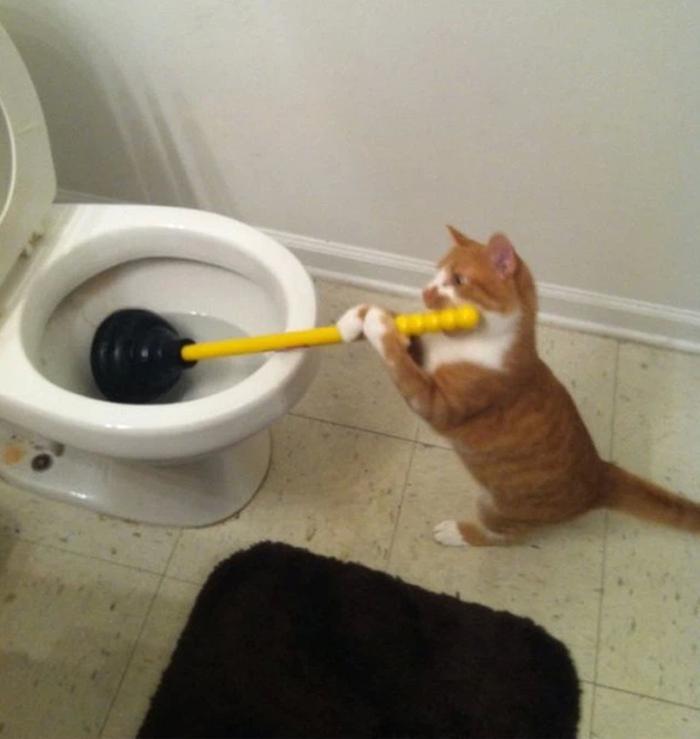 Ảnh mèo bựa buồn cười