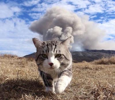 Ảnh mèo bựa Cool ngầu