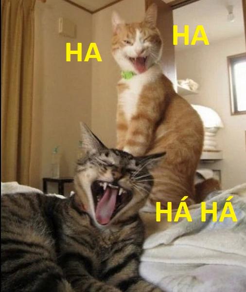 Ảnh mèo bựa cười