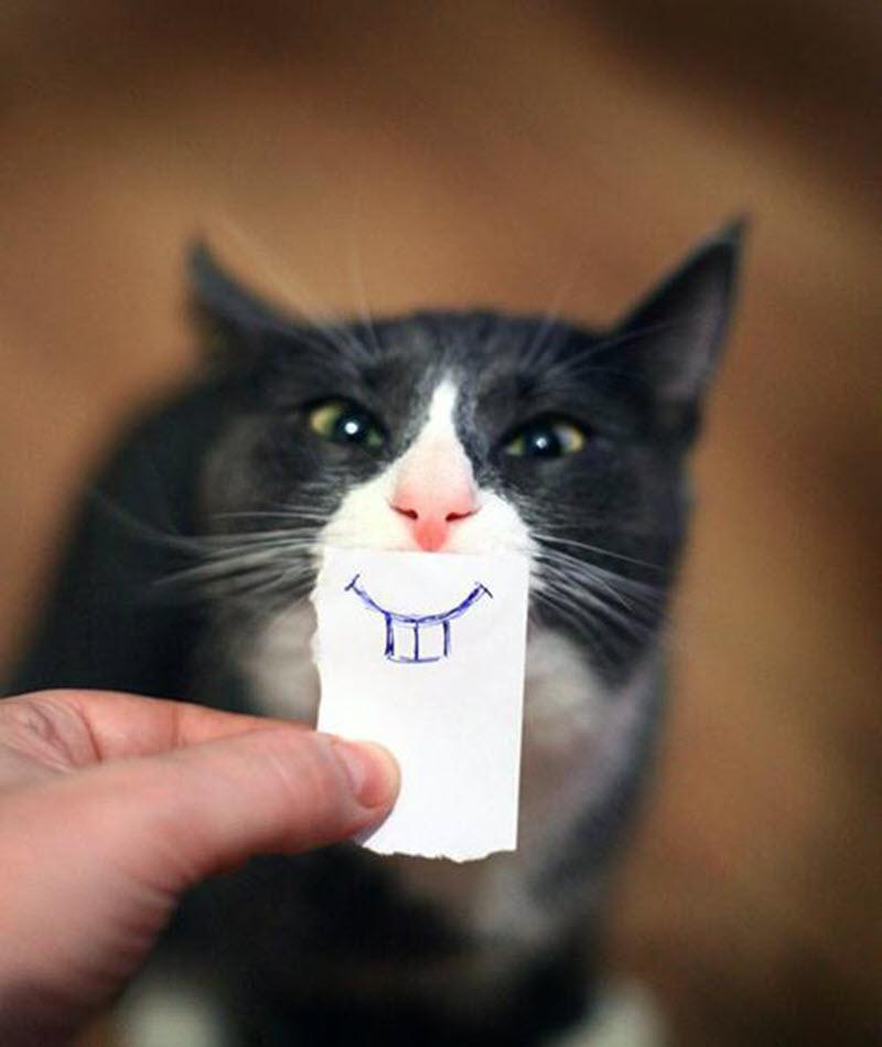 Ảnh mèo bựa ngộ nghĩnh buồn cười