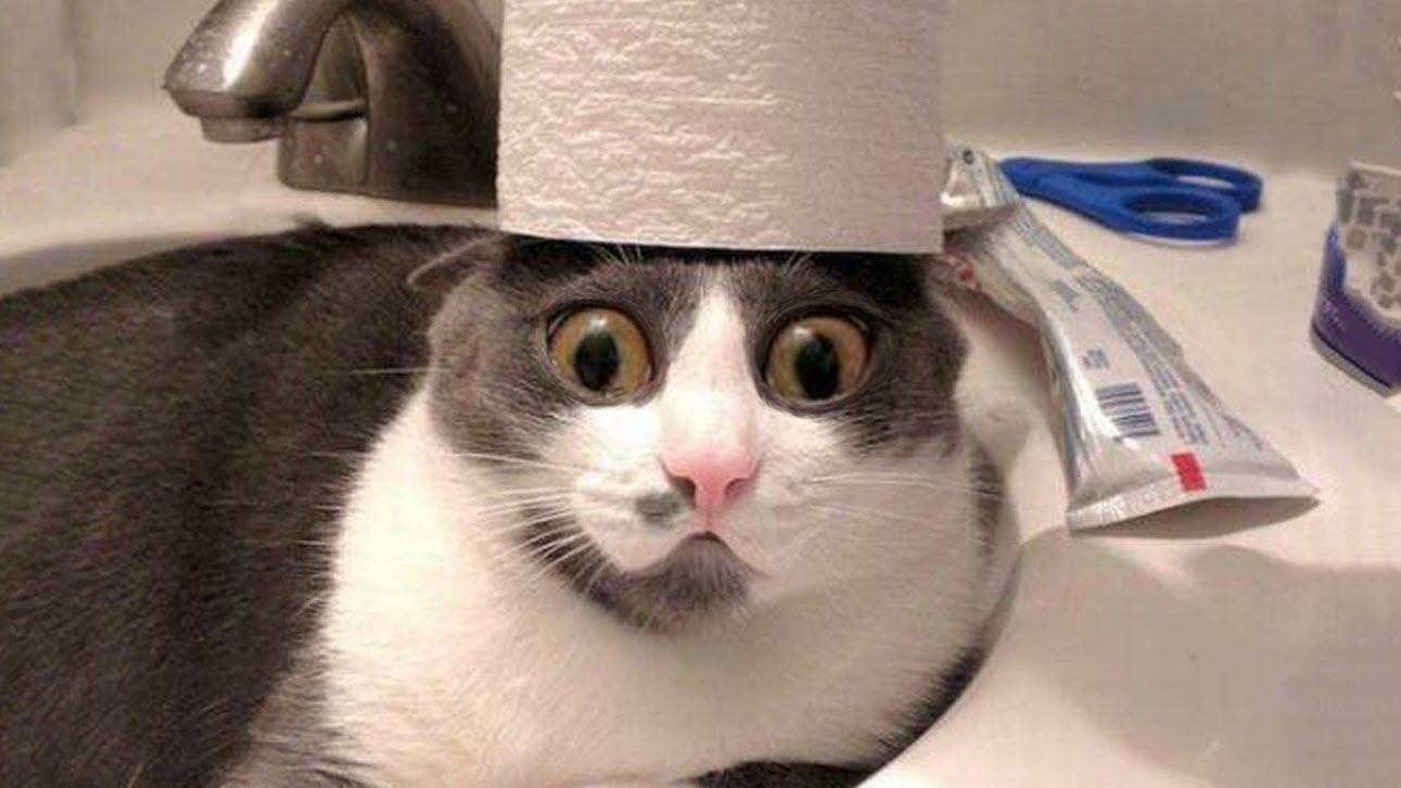Ảnh mèo bựa siêu ngố