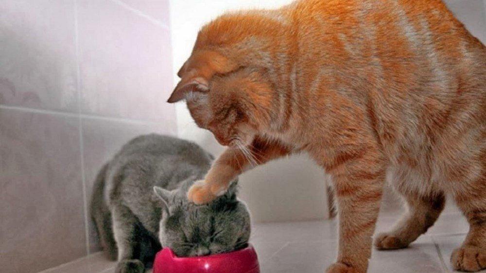 Ảnh mèo cực bựa