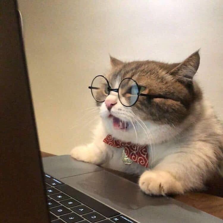 Ảnh mèo giáo sư siêu bựa
