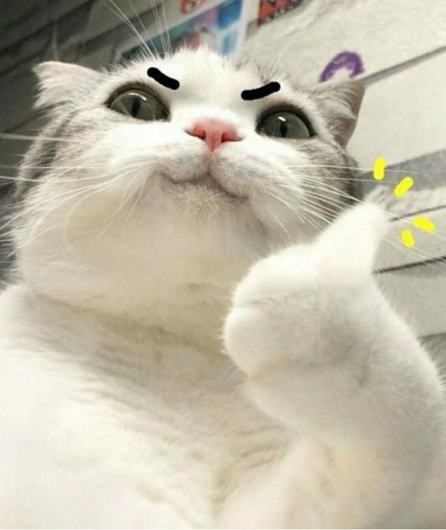 Ảnh mèo meme dễ thương