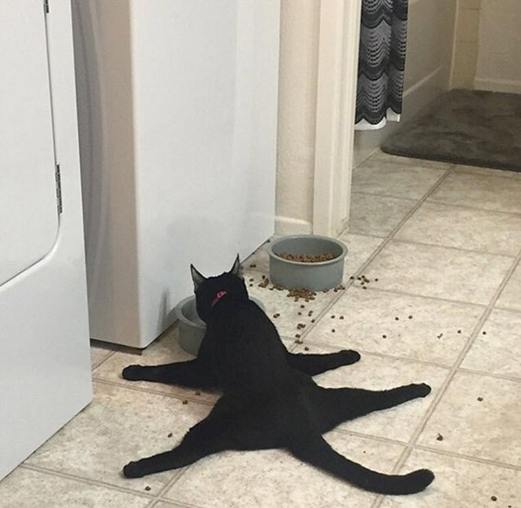 Ảnh mèo siêu buồn cười