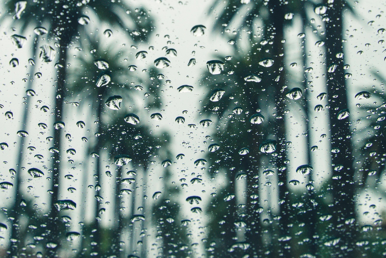Background rừng mưa đẹp