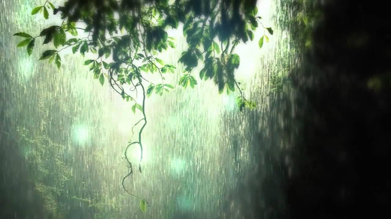 Background rừng mưa