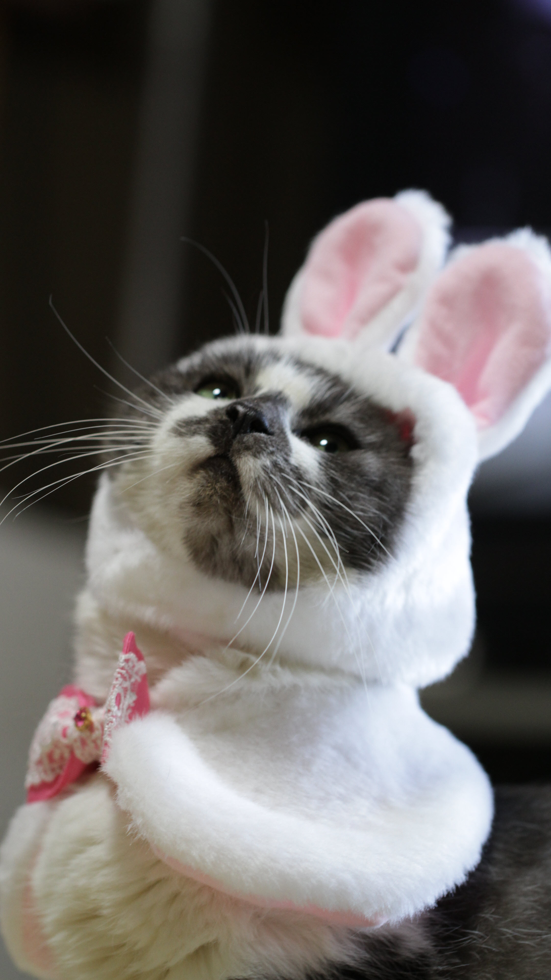 Ảnh nền điện thoại 4K mèo cute