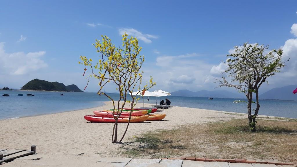 Hình ảnh hoa vàng đảo Điệp Sơn