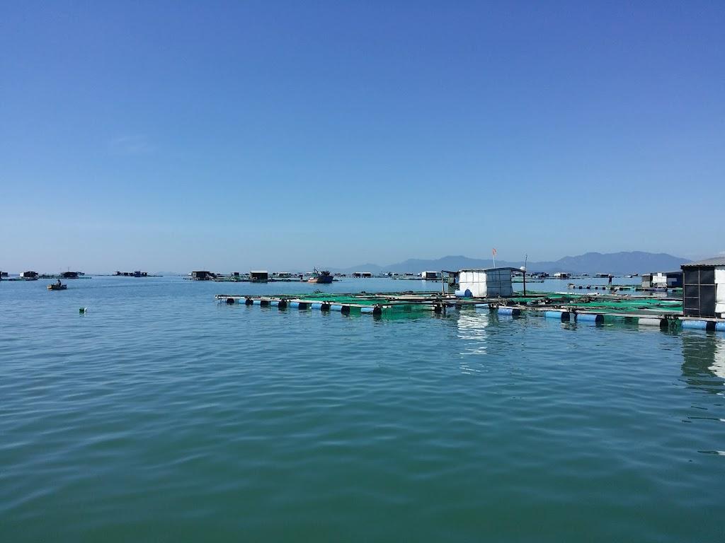 Hình ảnh lồng bè đảo Điệp Sơn