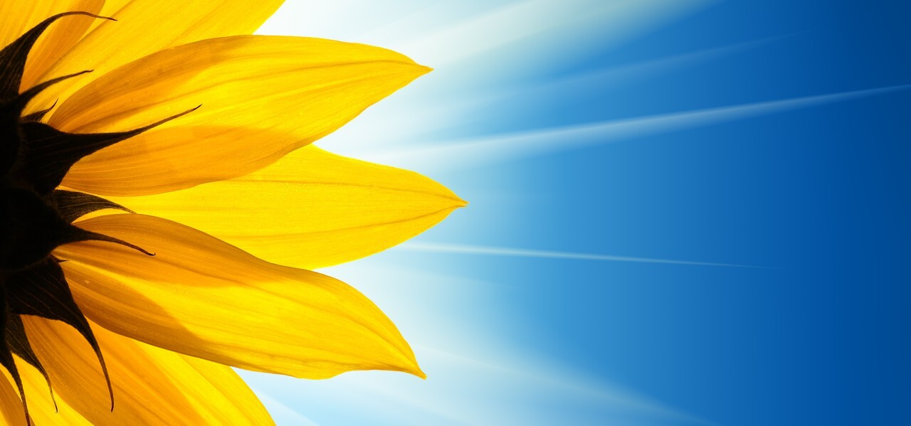 Background hoa mùa hè